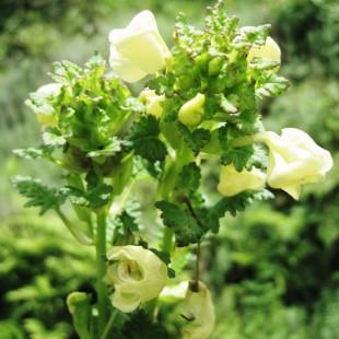 botany3
